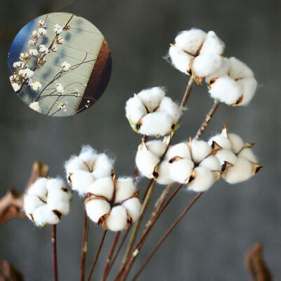 Natural Dried Cotton Stems Fake Flower Foliage Floral Decor OHyJu