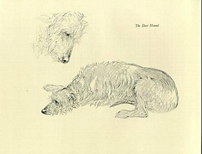 Scottish Deerhound dog drawing K. F. Barker 1938