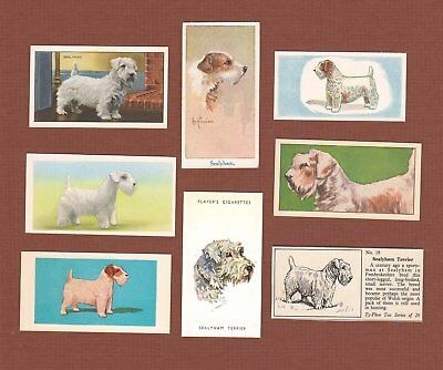 Sealyham Terrier dog trade cards set of 8