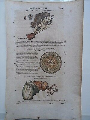 Fifteener Incunable leaf-1500's Science-Biology-original copper plate etching