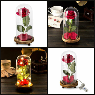 Beauty and the Beast Enchanted Rose Fallen Petals in Glass Dome Valentines Gift