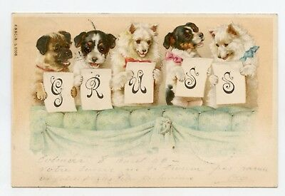 Helena MAGUIRE non signé . Unsigned . Chiens  . Dogs  GRUSS . (Year 1899)