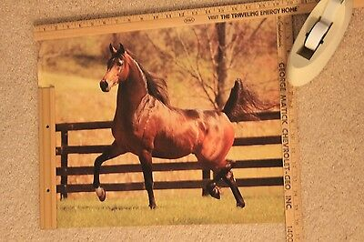 16 x 20 Poster of Arabian Stallion El Ghazi - Lasma East