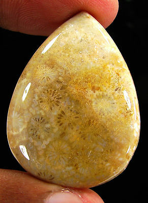 51.70 Ct Natural Fossil Coral Loose Gemstone Beautiful Cabochon Stone - 17269