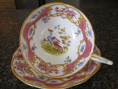 COALPORT TEACUP CUP SAUCER HOT PINK w/ EXOTIC BIRD of PARADISE from 1900's a