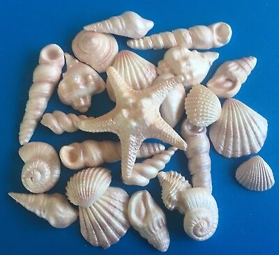 Shimmer Natural Edible sea shells  x 25 cake toppers/ decorations
