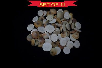 Gomti Chakra Natural Untreated Lucky Gemstones Of Gomati River - 11 Pieces