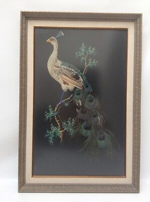 Stunning Antique Vtg Real Peacock Feather Framed Art Bird Gorgeous!