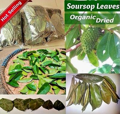 Soursop Leaves -Srilanka Dried Soursop Leaves Guanabana/Graviola/Annona Muricata