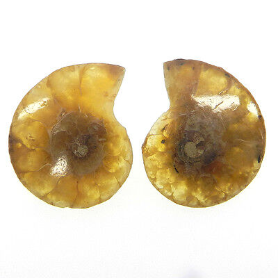 62.2 Cts Good Quality 1 Pair Fossil Ammonite 26x33mm Fantastic Gemstone ER10105