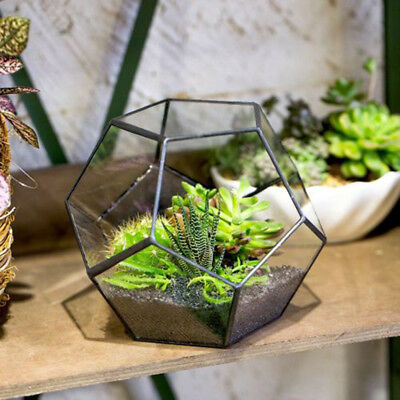Tabletop Irregular Prism Glass Geometric Terrarium Box Tabletop Succulent Moss