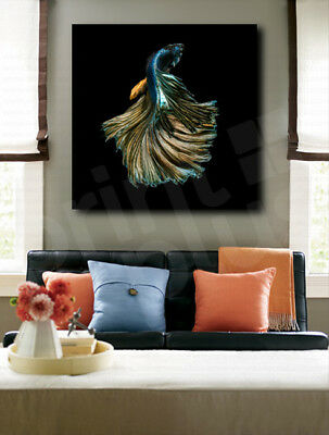 Betta Fish Black Background Canvas Art Poster Print Home Wall Decor
