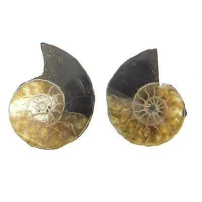 13.1 Cts 1 Pair Fossil Ammonite 15x20mm Gemstone for Making Jewelry ER10104
