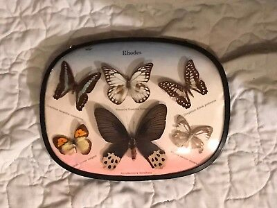 PROFESSIONALLY FRAMED AND MOUNTED COLLECTION OF 6 RARE REAL BUTTERFLIES 125a