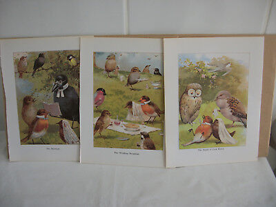 Lot of mixed bookplates from Childrens Nursery Rhymes book Ref 2 Birds