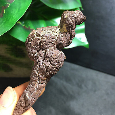 83mm Rare dinosaur dung coprolite Fossil Petrified Poop  50g