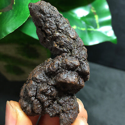 63mm Rare dinosaur dung coprolite Fossil Petrified Poop  54g