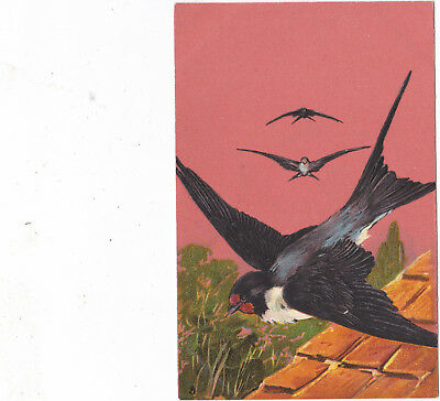 Tuck Arts Series- Swallows. very nice raised effect in lovely condition.