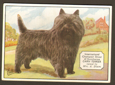 DOG Cairn Terrier (Named), Antique 1930s Trading Card
