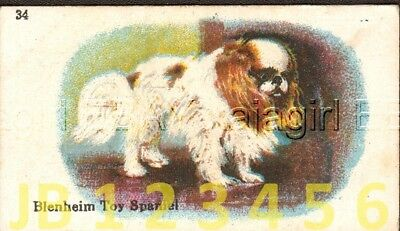 DOG Cavalier King Charles Spaniel Blenheim (Named), Small Trading Card 1912