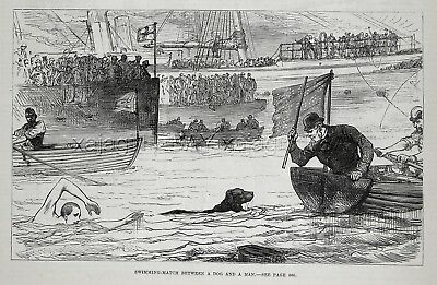 Dog Flat-Coated Retriever in Swimming Race with Man, Large 1880s Antique Print