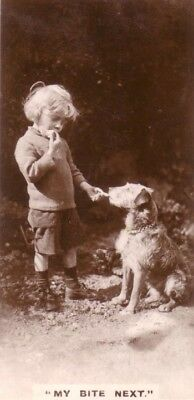 DOG Lakeland Terrier, Trading Card, 1930s Real Photo