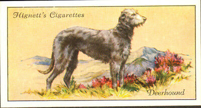 DOG Scottish Deerhound, Small British Trading Card 1936