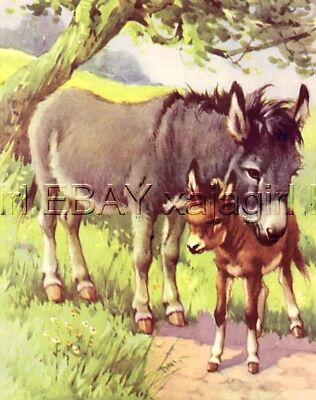 Donkey and Angelic Foal, 70-year-old CHILDREN's Print
