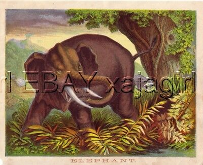 ELEPHANT, Amazing & Colorful 1880s Chromolith Print
