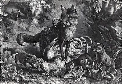 Fox Mother Brings Rooster to Her Puppies, Large 1860s Antique Engraving Print
