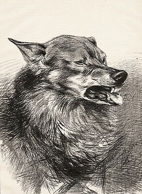 Wolf Breeding in Paris France, Large 1890s Antique Print & Article