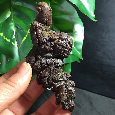 99mm Rare dinosaur dung coprolite Fossil Petrified Poop  109g