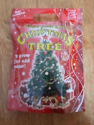 Grow Your Own Christmas Tree New