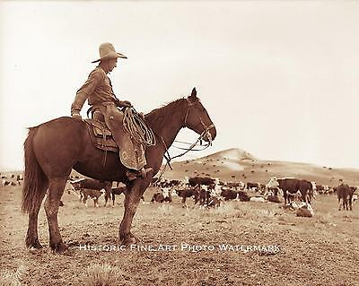 Cowboy Watching Over Herd Of Cattle Vintage Photo Old West 1880 #21529