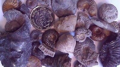 Ammonites etc.Large Collection.Collected Dorset Jurassic Coast over many years.
