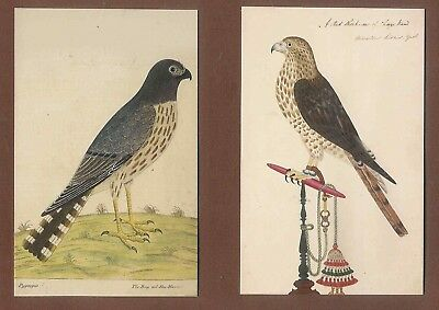 2 High Quality postcards birds of prey (Hen Harrier and Red Sheckraw)  D48