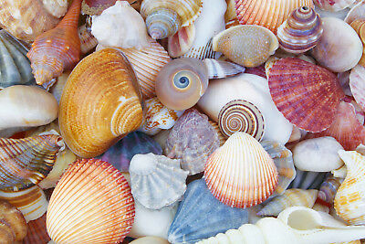 shells on tropical beautiful beach Quality wall Canvas Home Decor Painting Print