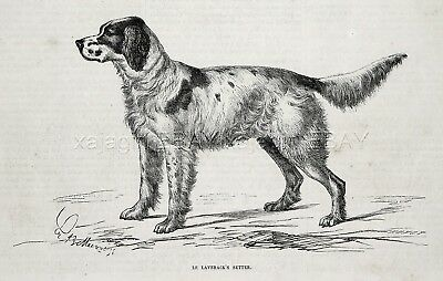 Dog Llewellin Setter English Setter, 1870s Antique Engraving Print & Article