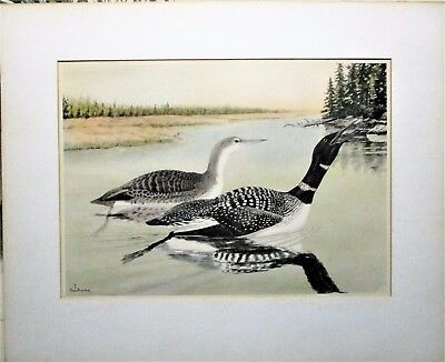 "Authentic Rex Brasher Original Print Of American Loons ""gavia Immer"""