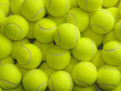 50 Used Premium Tennis Balls -Ideal For Dogs Used Only Indoors by a Tennis Coach