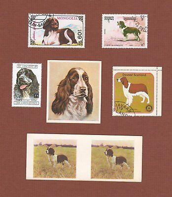 English Springer Spaniel dog postage stamps and cards set of 6