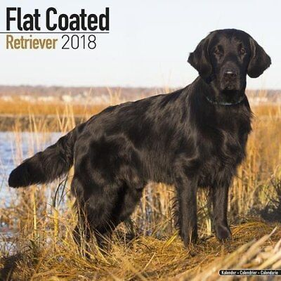 Flatcoated Retriever (Square)