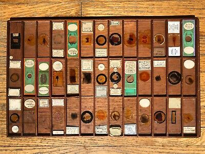 39 Antique Microscope Slides in Wooden try