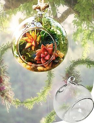"""4""""Dia Hanging Glass Globe Terrarium Candle Holder Bulk 