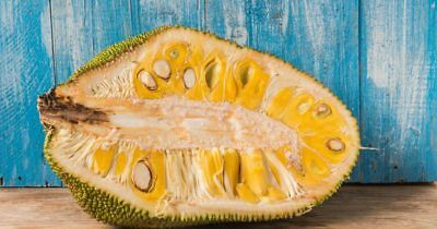 "World Largest Tree Fruit-Sri Lankan ""18 months""Jack fruit Choose your Quantity"