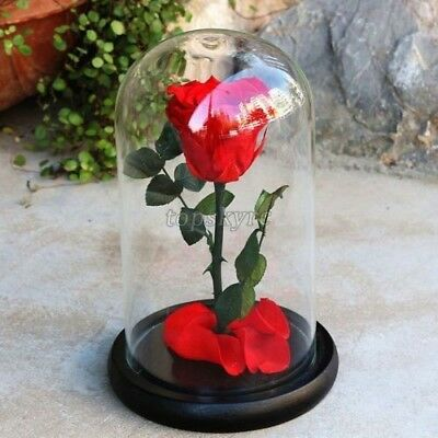 Beauty And The Beast Real Preserved Red Rose In Glass Dome Enchanted