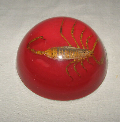 Vintage Real Scorpion Paperweight