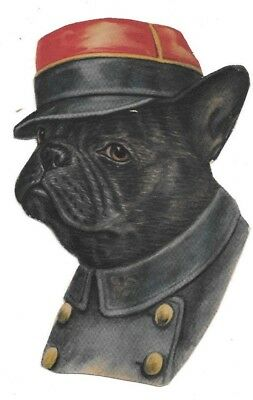 RARE ANTIQUE American Bulldog Diecut, Clothed for a Usher or Elevator Operator