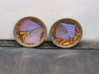 Real butterfly wing trinket  dish