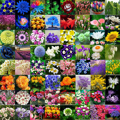 Various Flower Seed Home Garden Heirloom Potted Rare Flower Plant Ornamental New